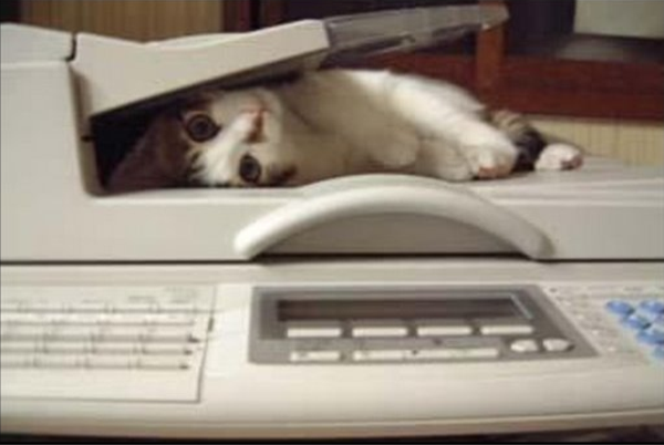 Faxcat